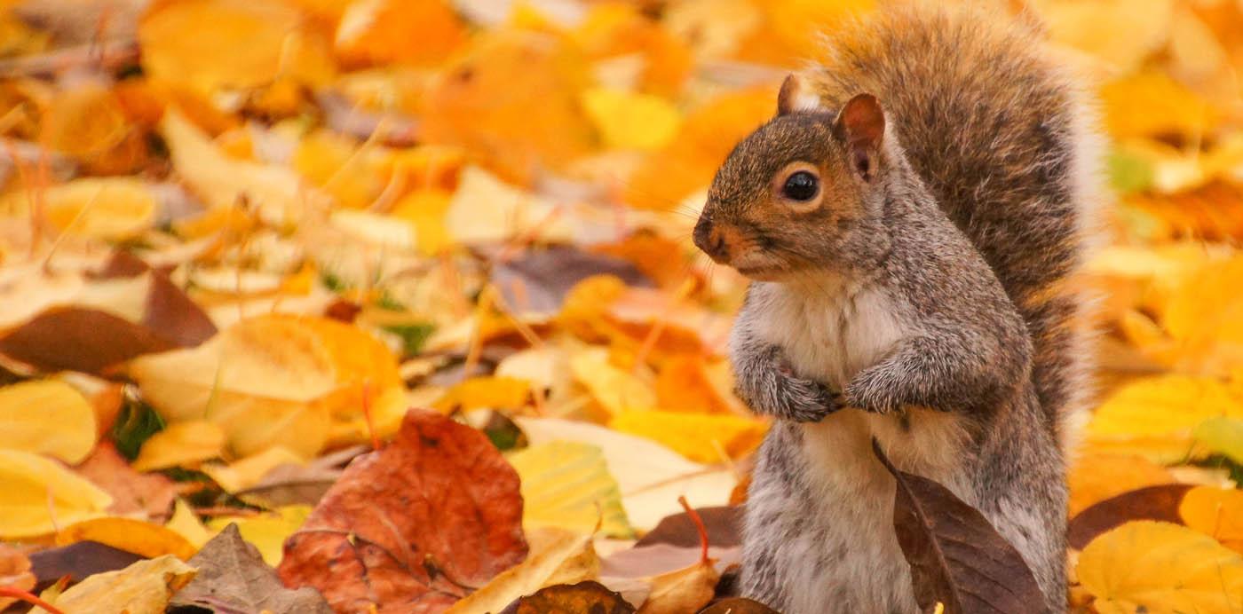 Slider_squirrel